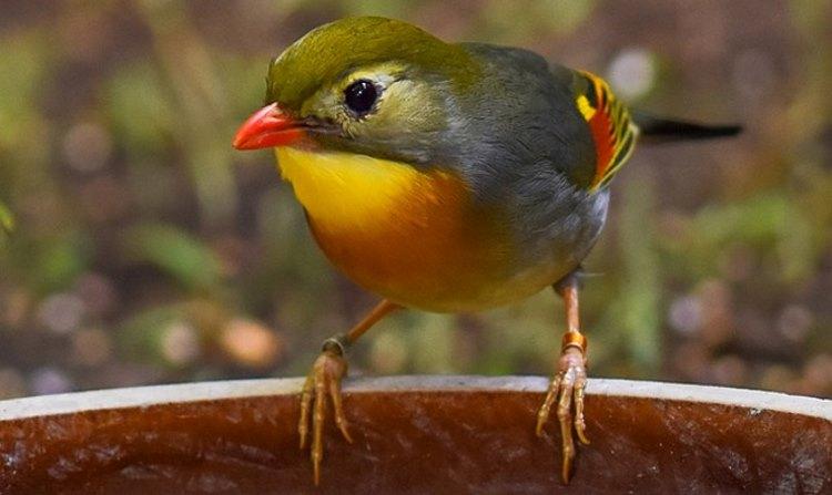 μεγάλο πουλί post όργια σε πορνό