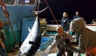Έπιασαν τόνο – γίγαντα 2,74 μέτρων και 288 κιλών στη Νάξο – Δείτε φωτογραφίες