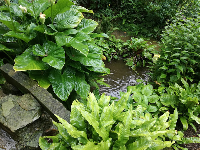 Water Garden, ogród w cieniu, woda w ogrodzie