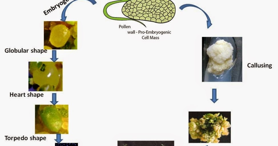 Multiple Choice Questions On Agricultural Biotechnology border=
