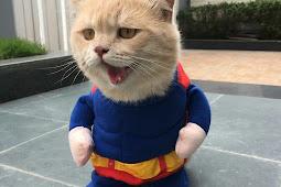 10 Foto Cho, Kucing Selebgram Yang Menggemaskan, Cat Lover Wajib Baca