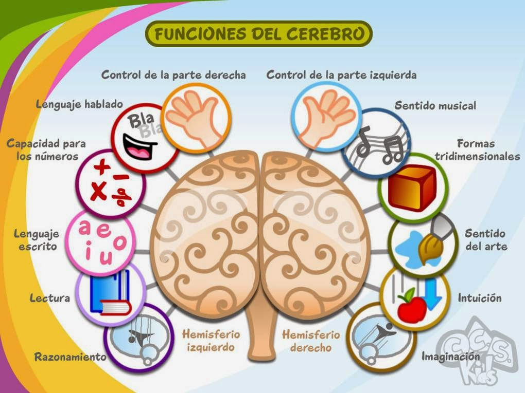 Como estimular el cerebro.// NEUROCIENCIAS