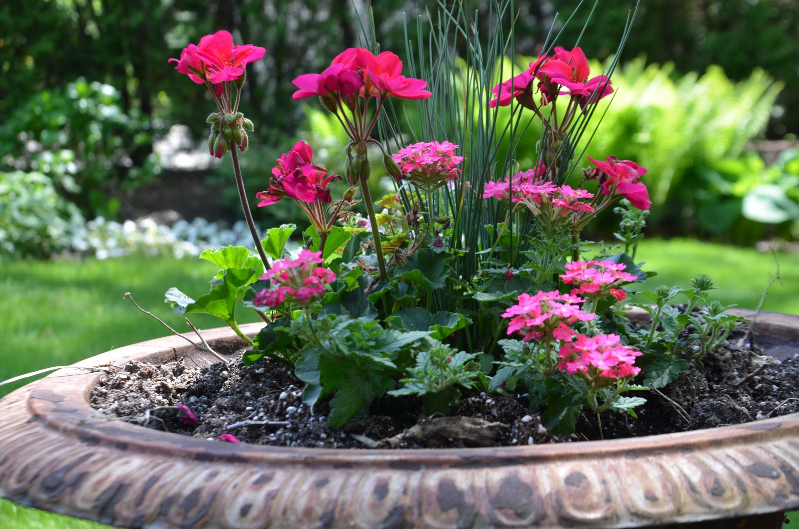 Here In Southeast Michigan The Safe Bet Is To Wait Until Middle Of May Plant Warm Weather Annuals Like Petunias Impatiens And Geraniums