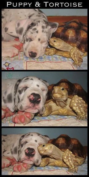 Cute images. Puppy and tortoise
