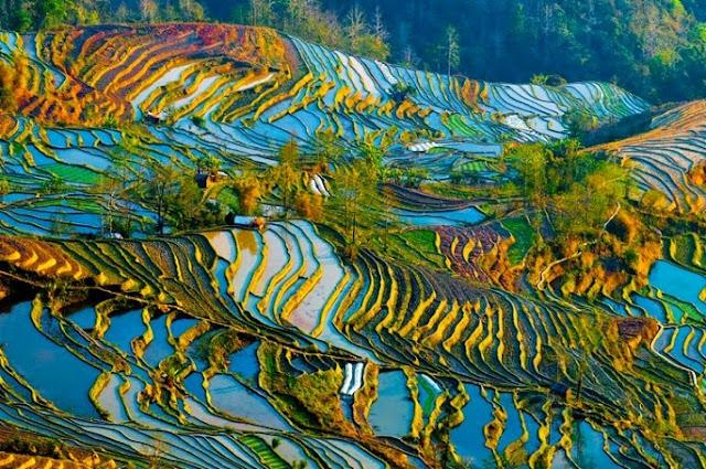 Hani dan Longji, Sawah dengan Pemandangan Menakjubkan di Cina