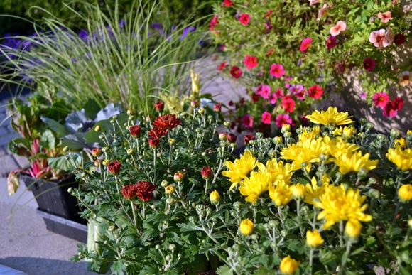 Planting mums: Wheelbarrow Planter | DIY Playbook