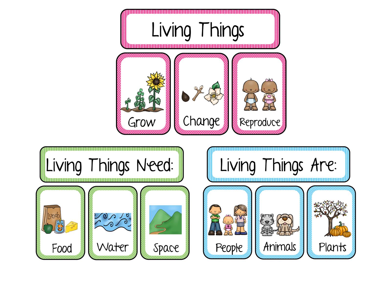 Apren Ndo Ingles En El Sanse Living And Non Living Things
