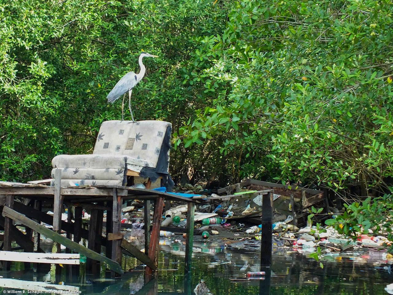 A ocupação desenfreada de áreas de mangue no estuário de Santos gera um enorme impacto ambiental que acarreta prejuízos para importantes setores da economia local, como a saúde pública, o turismo e a pesca.
