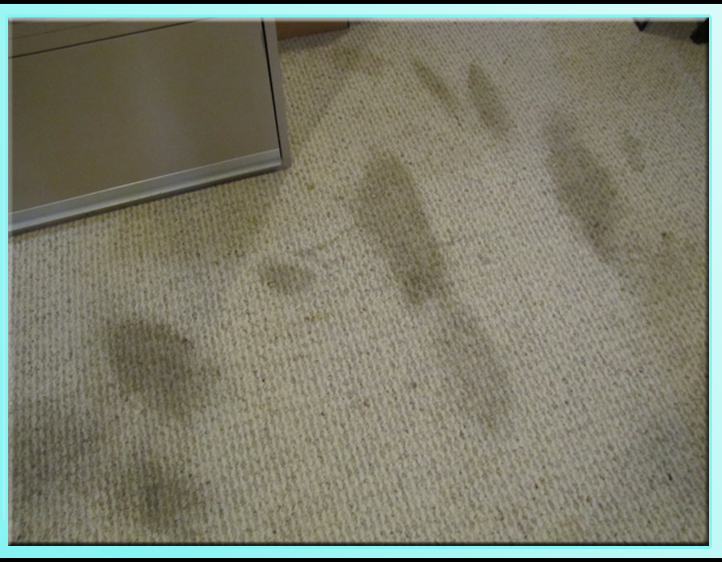 Best Carpet Cleaner And Stain Remover: Green Pet Stain ...