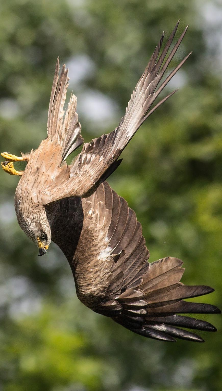 Amazing nose dive bird capture.