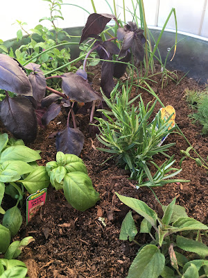 Container gardening- bucket of herbs- The Style Sisters