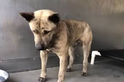 He's terrified and heartbroken, owner don't care. They left him in the shelter to die