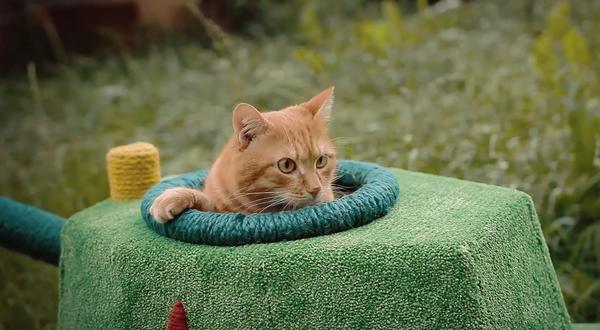 танк для кота