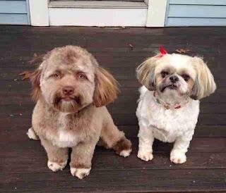 Perro con cara de humano
