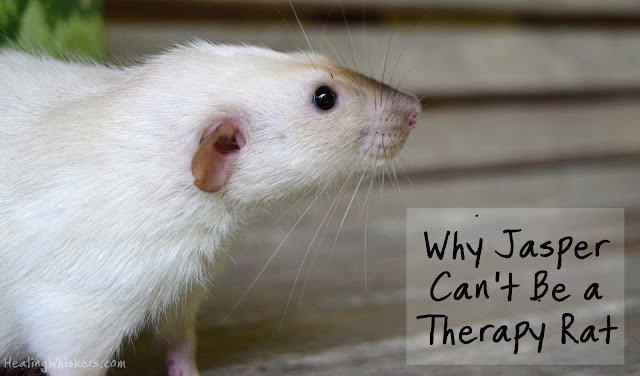 Why Jasper Can't Be a Therapy Rat