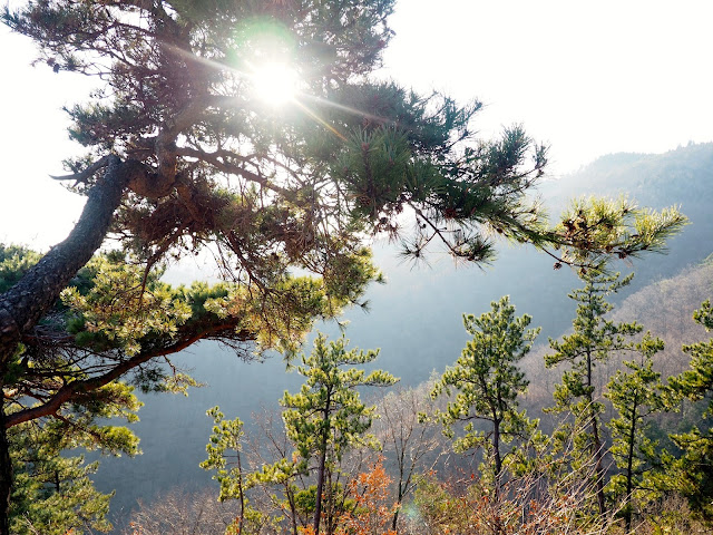 Sunlight through trees, taken at the observation point at the top of Boseong Green Tea Plantation, South Korea