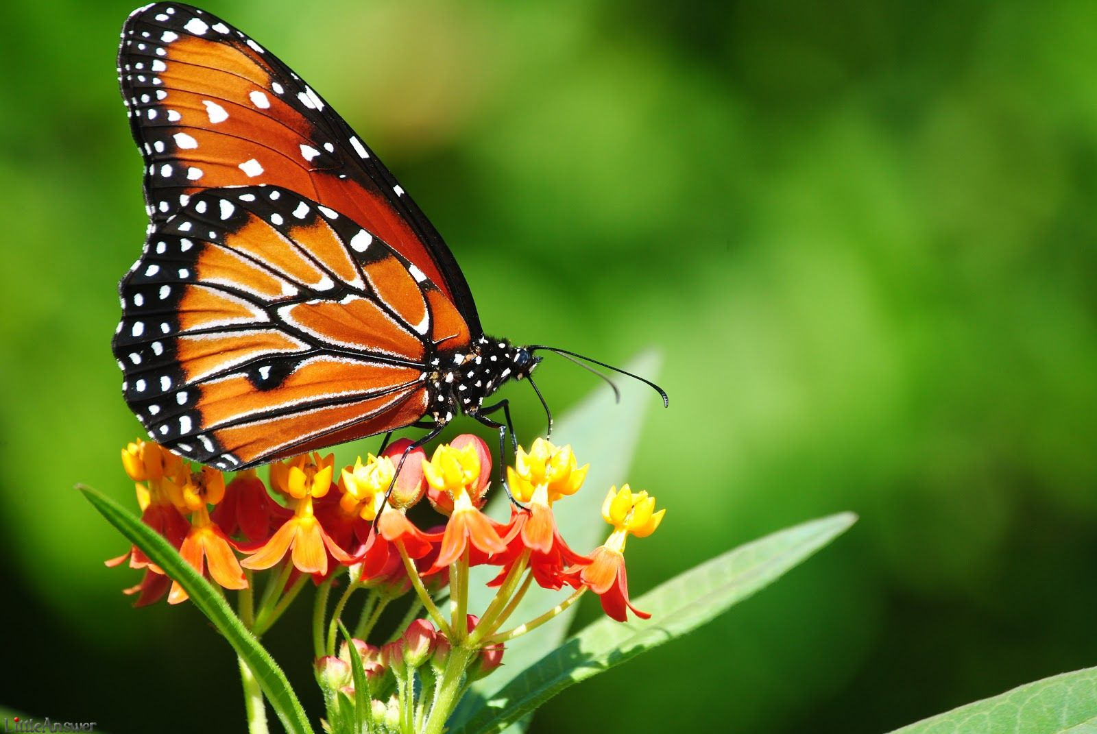 Best Natural Colourful Butterfly Hd Wallpapers For Android