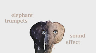 elephant animal sound