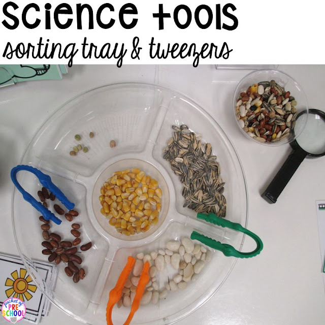 How to set up the Science Center in your Early Childhood ...