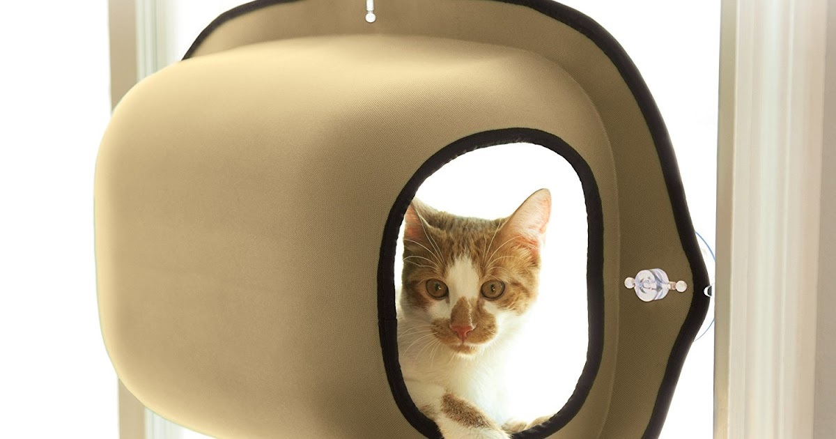 Window Mounted Cat Pod Bed Lets Your Kitty Enjoy The