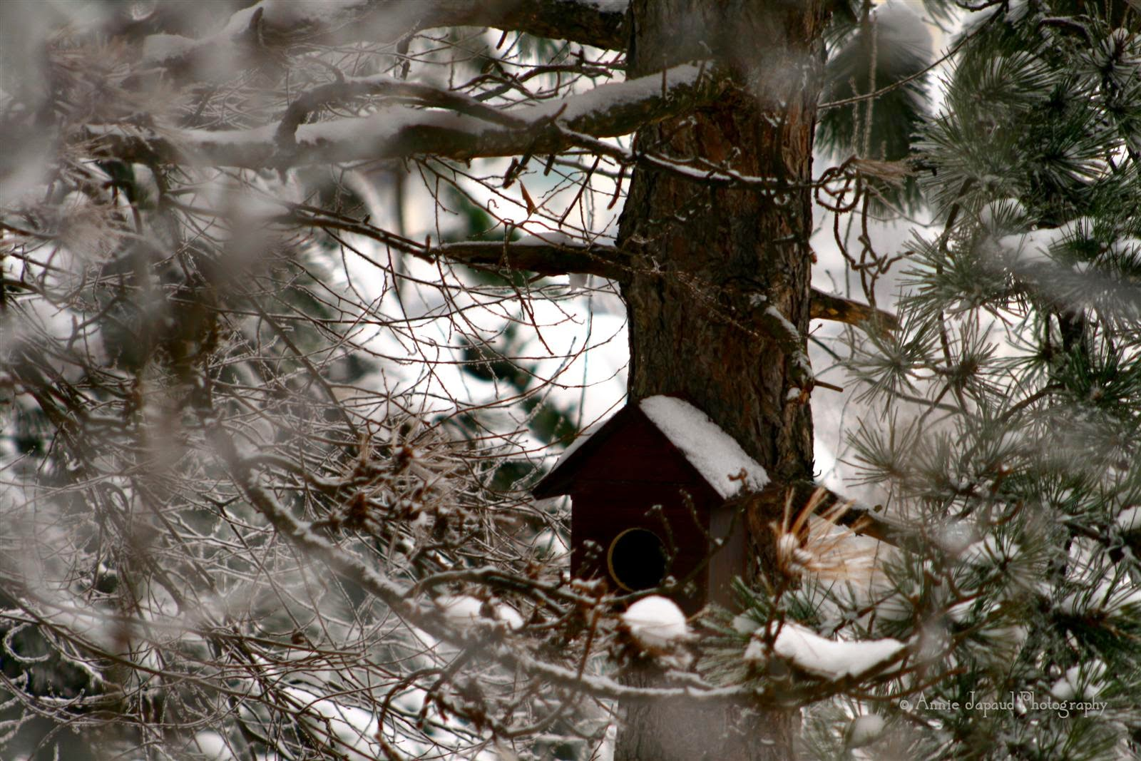 bird house in a tree, snow