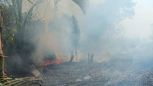 Karhutla di Samarinda Hanguskan 11 Hektare Lahan dalam Sepekan