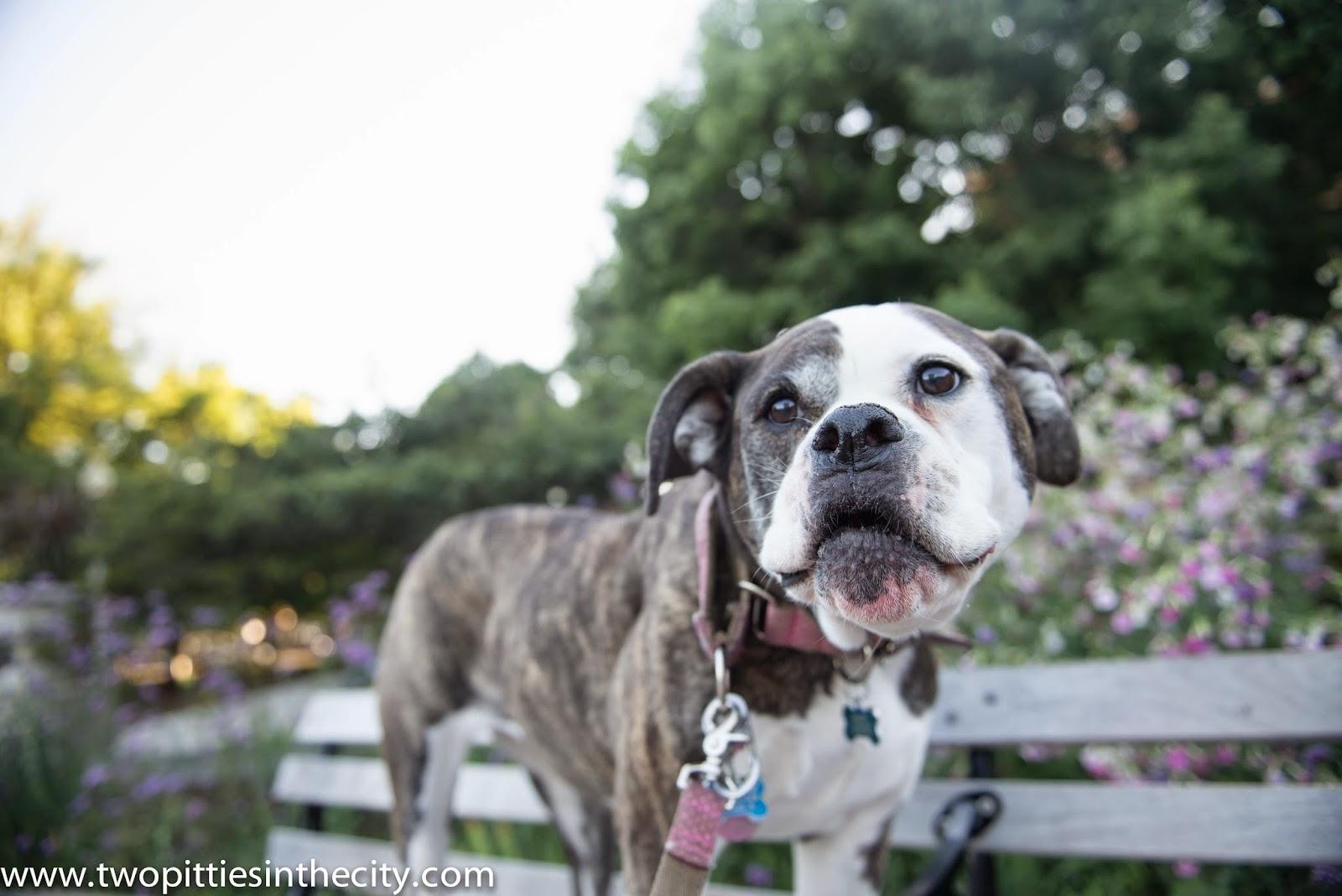 Craigslist New Orleans Pets - petfinder