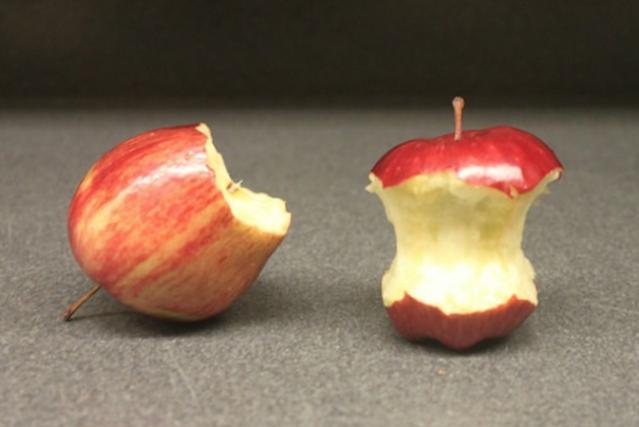 kesalahan makan buah