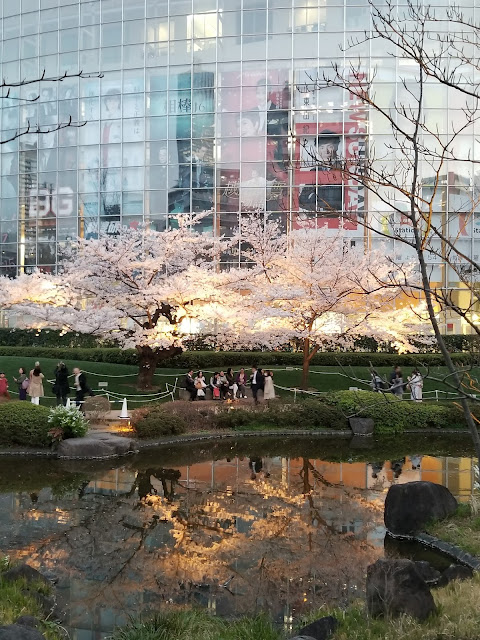 Mori Garden, Cerezos en flor, Cherry, Blossoms, Sakura, Roppongi Hills, Hanami, Minato, Tokyo, Tokio, Japón, Japan, Viaje a Japón, Japan Travel, Elisa N, Blog de Viajes, Lifestyle, Travel