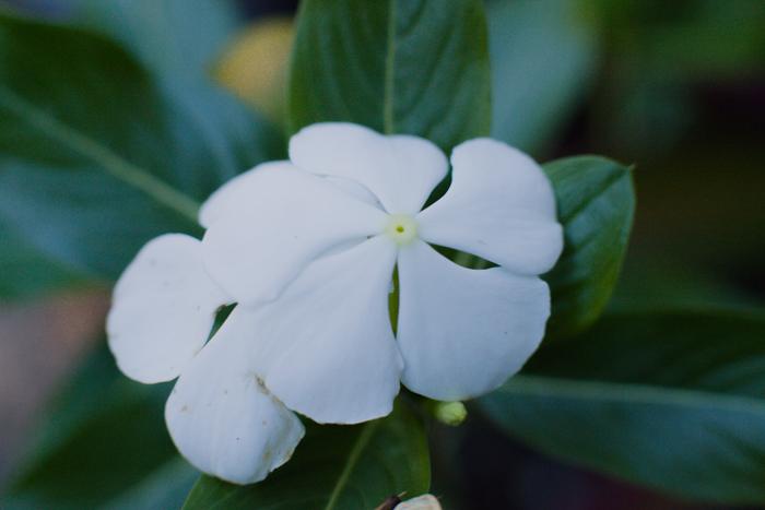 floral blog series