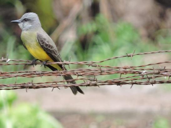Beleza em Fotos - Pássaros blogueira fotografica