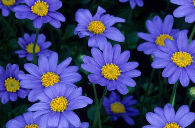 Types Of Purple Flowers