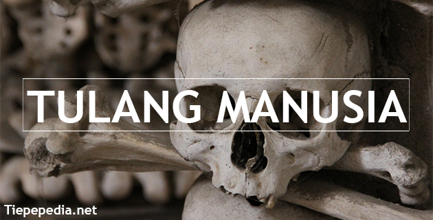 Pengertian Tulang Lengkap dengan Jenis, dan Bentuknya