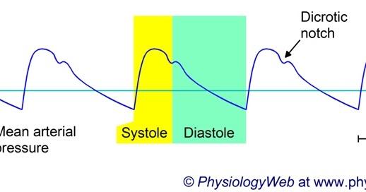 一位生命科學迷的浮光掠影: 血壓的定義以及血壓的正確觀念 2012年11月28日
