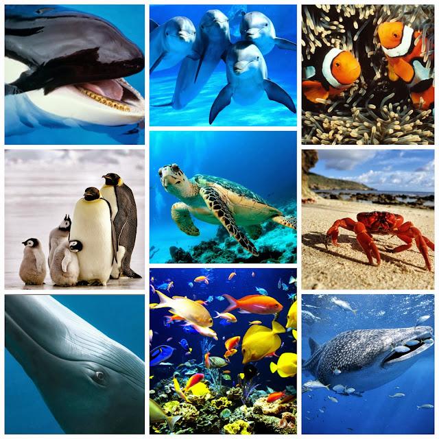 Clasificaci n de los animales animales acuaticos for Peces que no necesitan oxigeno
