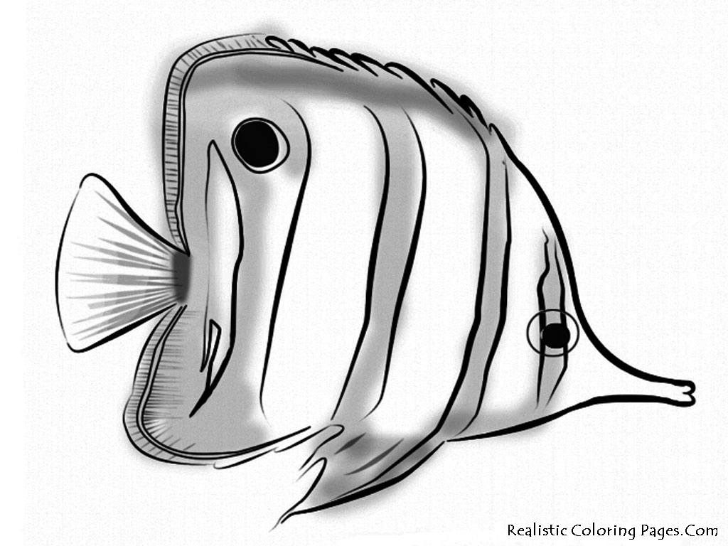 Realistic Ocean Fish Coloring Pages Coloring Page
