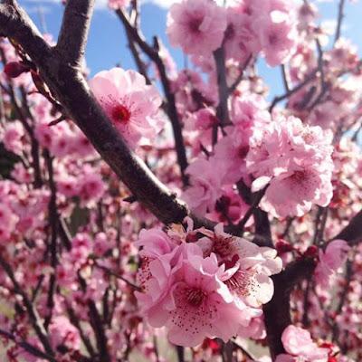 Spring in Australia