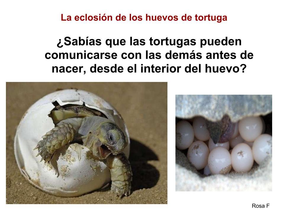 La Chachipedia: Tortugas terrestres y marinas