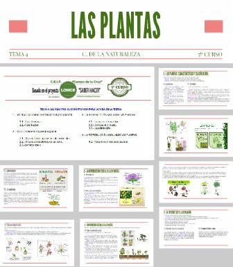 https://prezi.com/6u9idzvazwaf/c-naturales-5o-curso-tema-4-las-plantas/