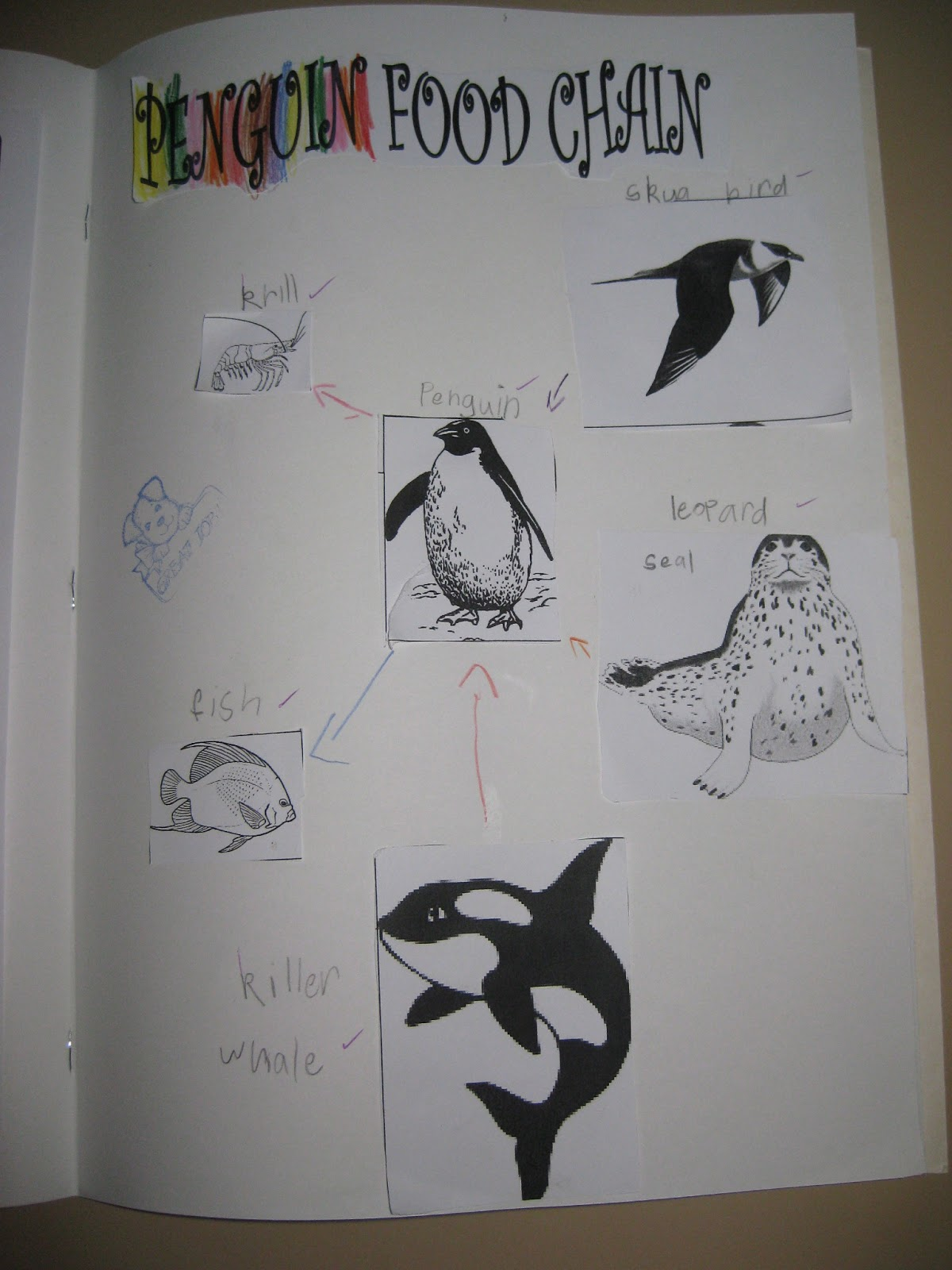 emperor penguin food chain - photo #28