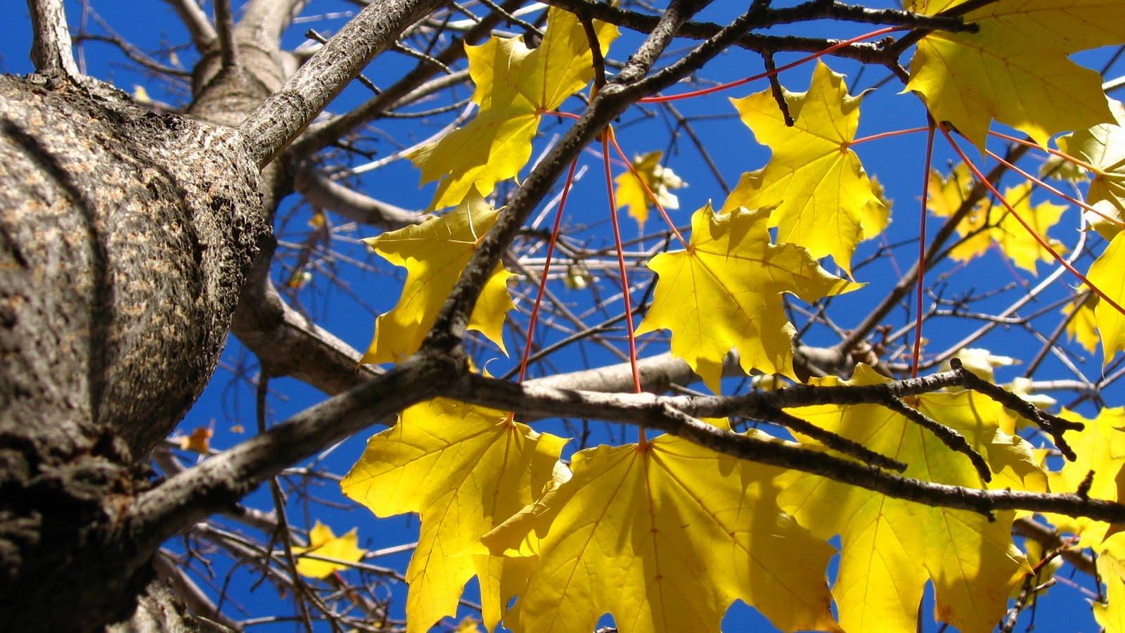 Gambar Pemandangan Musim Gugur Yang Sangat Indah Wallpaper