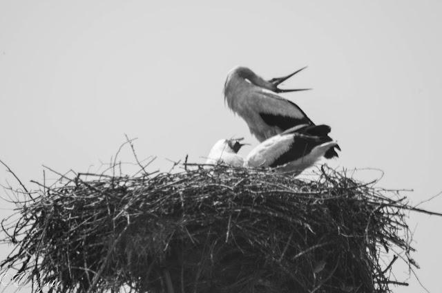 В-гнездото-на-щъркела-Stork`s-nest