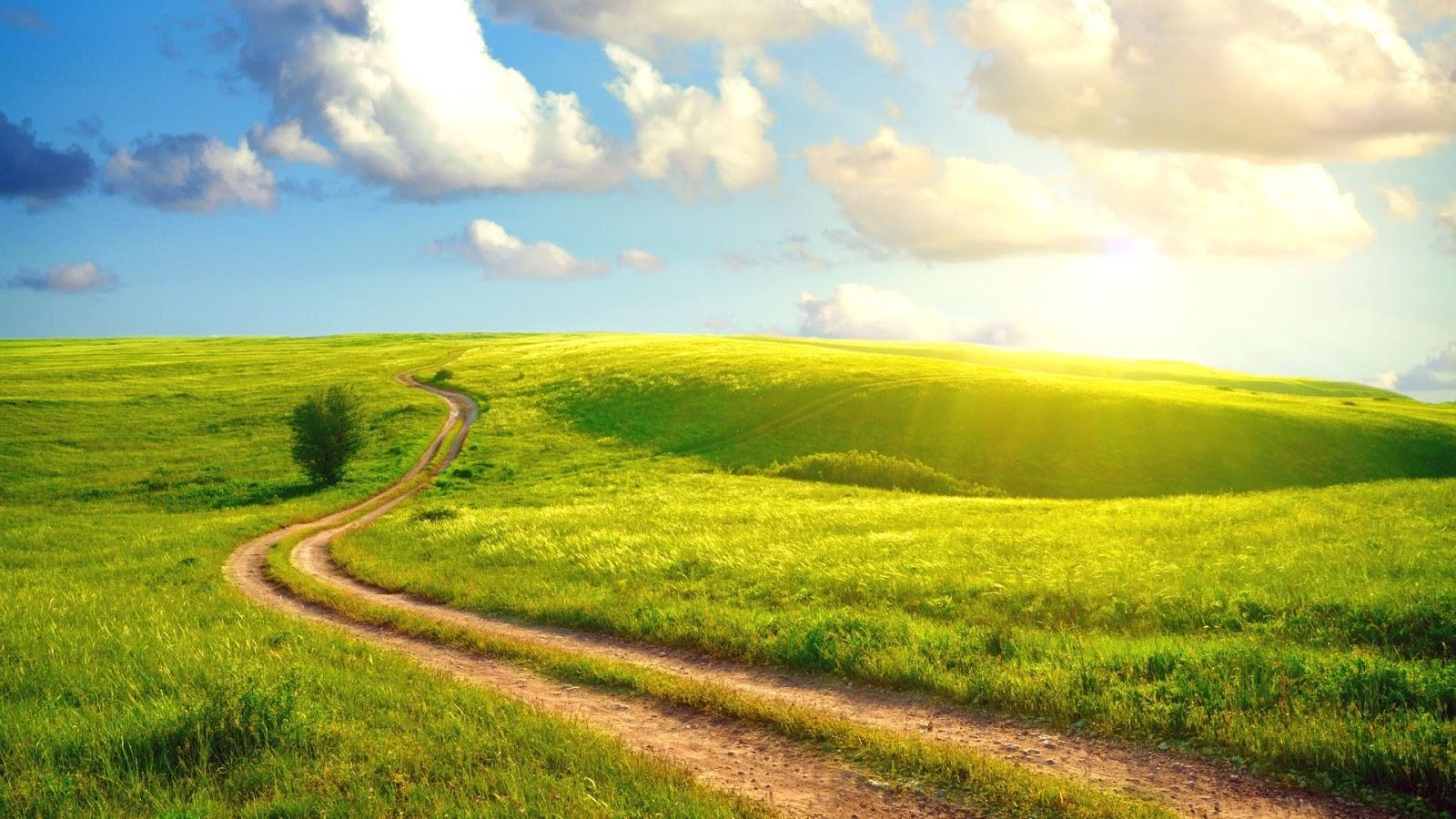 hình nền con đường mòn cực kỳ lãng mạng
