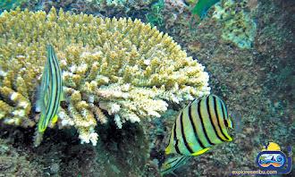 underwater pulau putri