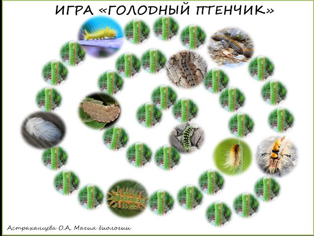 volosatye-gusenicy-shelkoprjad-jadovitye-gusenicy-igra-golodnyj-ptenchik