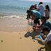 Releasing turtles, Turtle Conservation at Resorts World Kijal