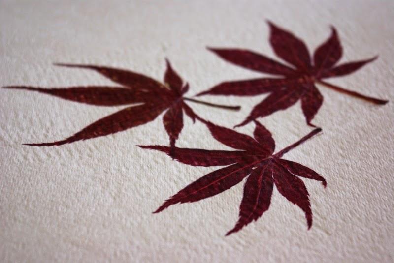 Impresiones naturales de plantas y flores en papel de acuarela6
