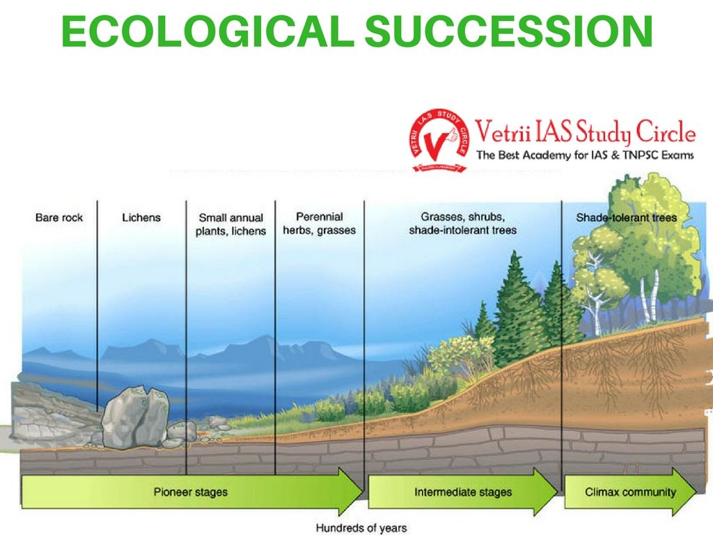 Ecological succession upsc tnpsc general knowledge wednesday october 12 2016 publicscrutiny Images