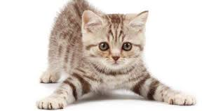 Dan mimpi mengenai kucing pun ada banyak. mulai dari angka kucing beranak, kucing melahirkan yang dicari hubungannya dengan 4d