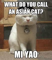 What Do You Call An Asian Cat Mi Yao Joke All You Can